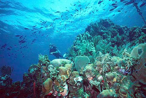 destruction of coral reefs essay Coral reef bleaching coral reefs are by far one of the world's most productive and beautiful habitats they also provide billions of dollars in economic benefits each year globally.