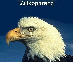"Witkoparend  (""bald eagle"")"